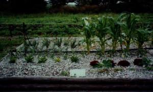 砂利だけの花壇