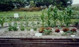 残土だけの花壇